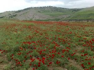 ابتدای جاده قزوین - بهرام آباد (بالاتر از دانشگاه آزاد) - نمای عکس به سمت بوستان باراجین